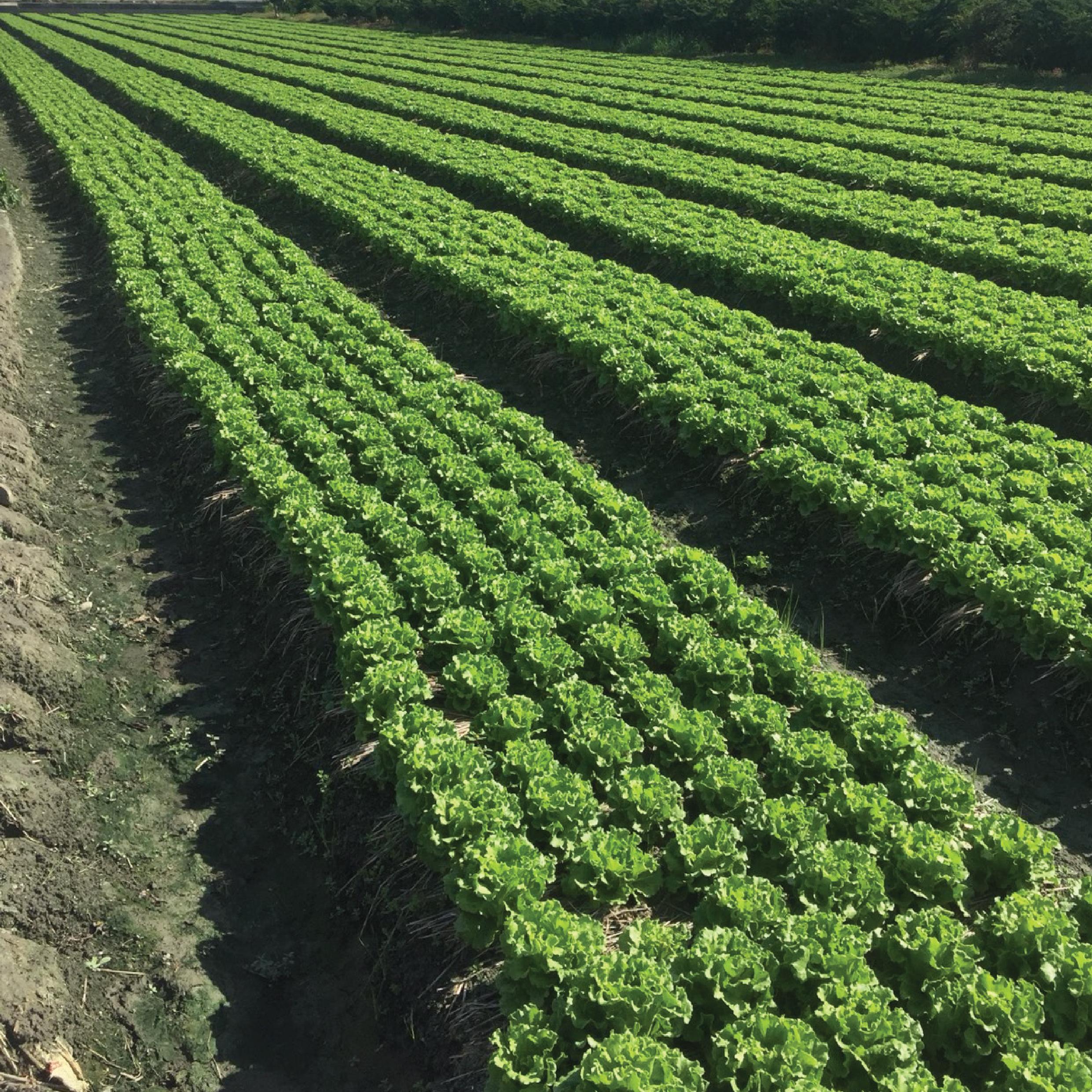 好立富友善農友栽培成效保證方案
