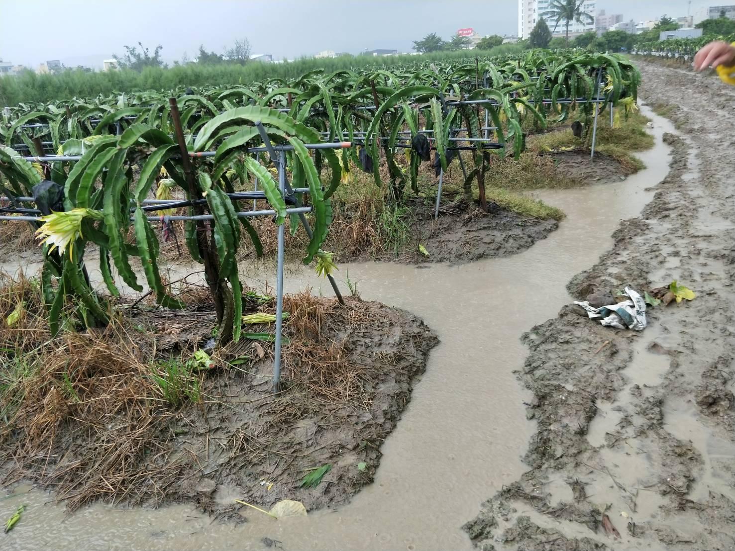 水災淹水後農田復耕方法