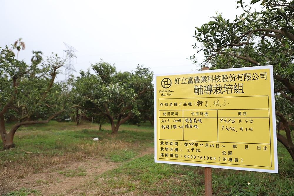 古坑湖山水庫柳丁-使用營養粉後、準備1號即溶肥根灌