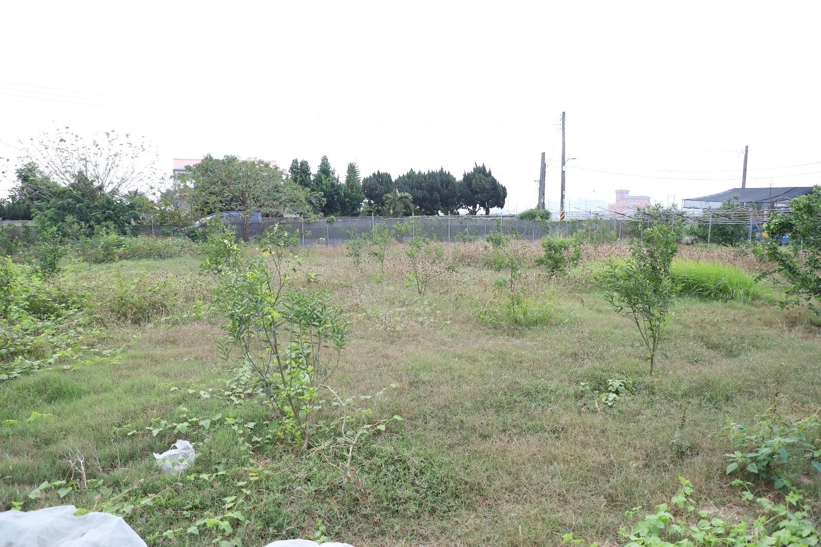 台南帝王柑-六甲區使用前後對照2019年