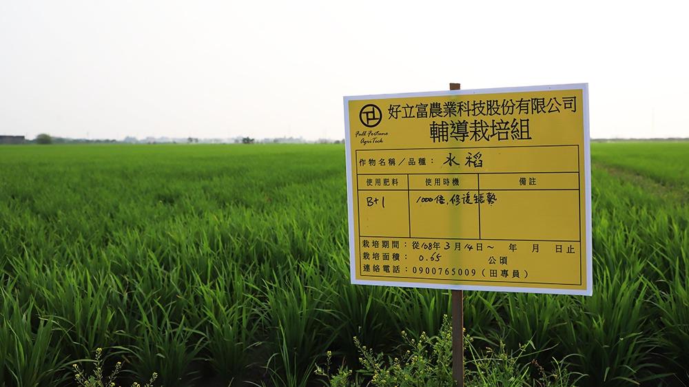 無人機使用SENT生技營養粉5天後水稻的差別-大家找一找