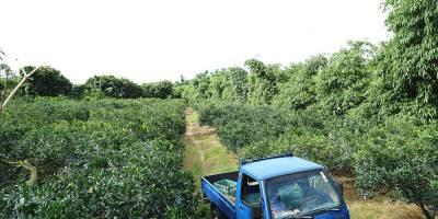 好立富農業-柑橘類的試驗與對照比較